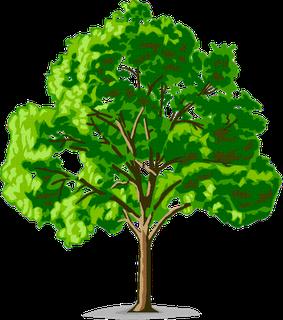 Arti gambar pohon dalam psikotes
